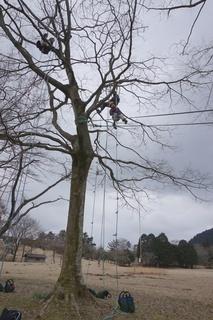 treeclimbing0329.jpg